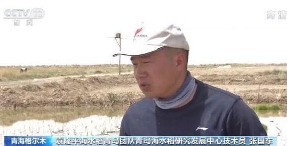 央视新闻客户端青海柴达木盆地盐碱地开始试种海水稻