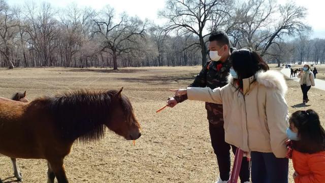 『生活报』黑龙江省旅游业逐渐复苏,?7成景区开放 !神鹿山迎来自驾旅游团