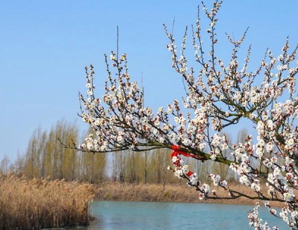 #旅行柚子君#江苏省泗洪洪泽湖湿地向全国警务人员免门票