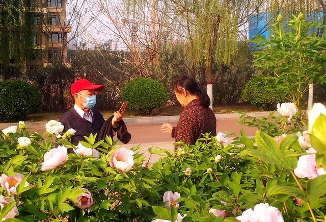 【旅行百事通】今日洛浦公园牡丹花开,游人前来赏花留影,带你免费看国花