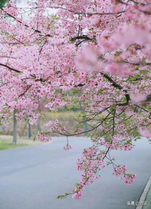 #旅行柚子君#这7家公园伴着鲜花重开了,春天还会远吗?