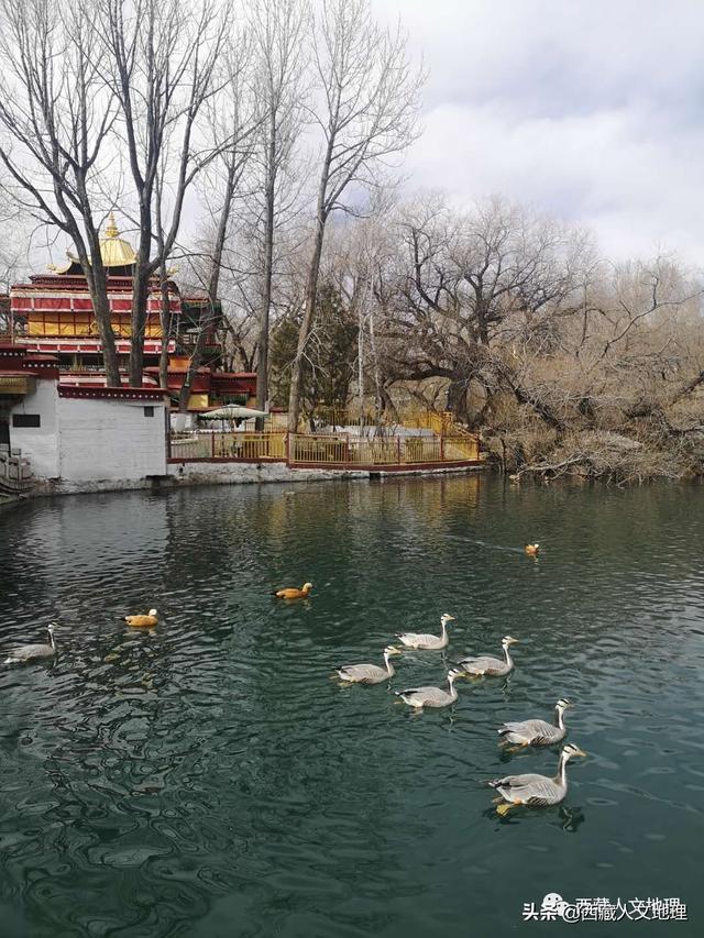 """趣旅游■疫情期,布达拉宫背后的""""牧鸭人"""""""