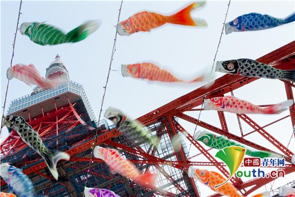 东京铁塔悬挂333只彩色鲤鱼旗 迎接日本男孩节