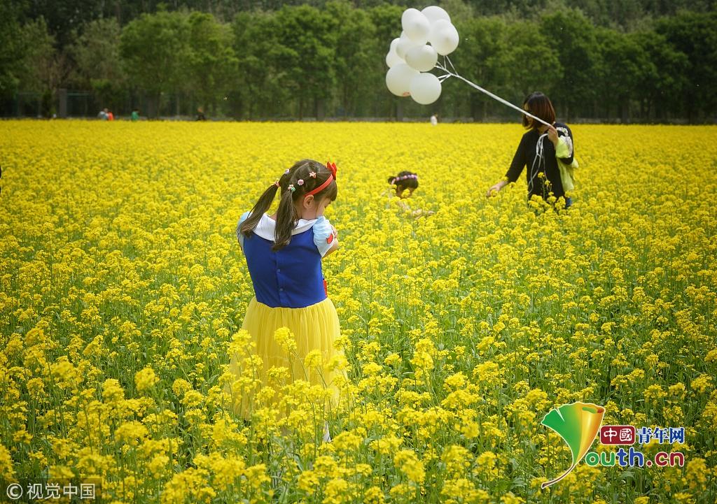 北京:顺义油菜花海美如画 吸引大批市民观赏