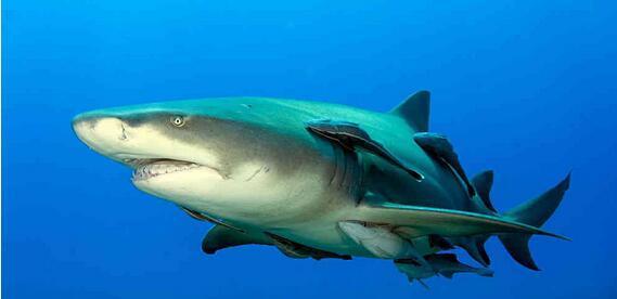 世界上最懒的鱼被曝光了