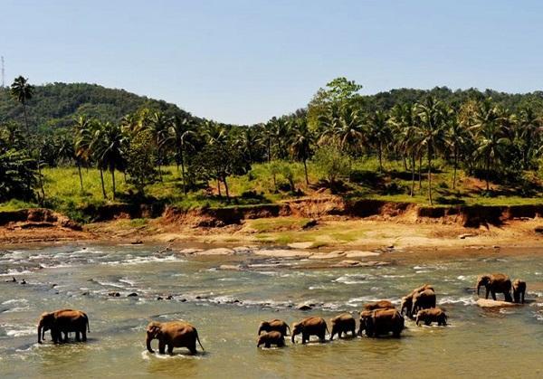 斯里兰卡8月1日起对中国游客免签